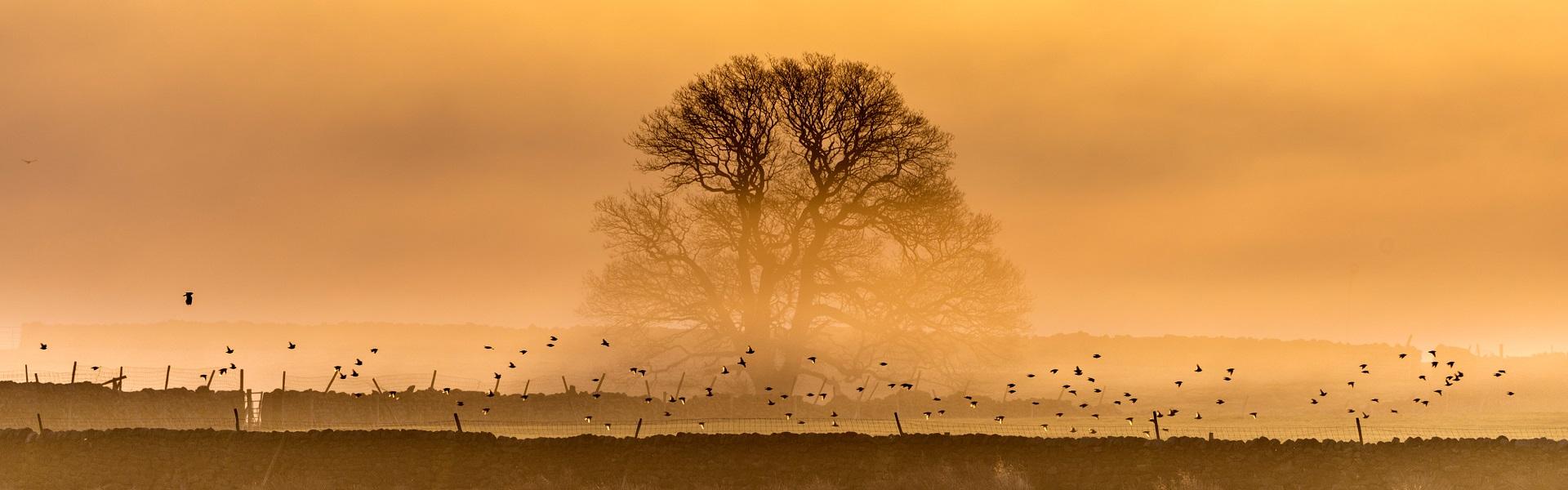 Ett landskap, ett träd och fåglar