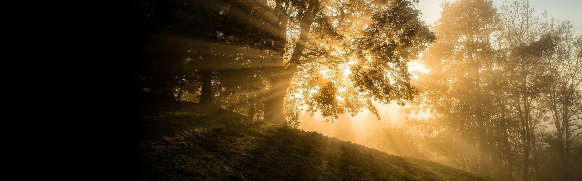 Träd i skog